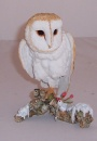 Country Artists Birds of Prey Barn Owl on Winter Branch